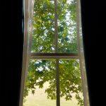 bright green chestnut tree leaves seen through a window